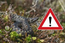 Отруйні змії: небезпека, яка очікує на лоні природи